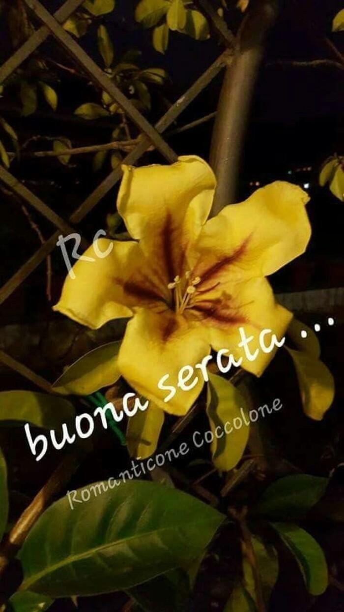 Belle immagini di Buona Serata (6)