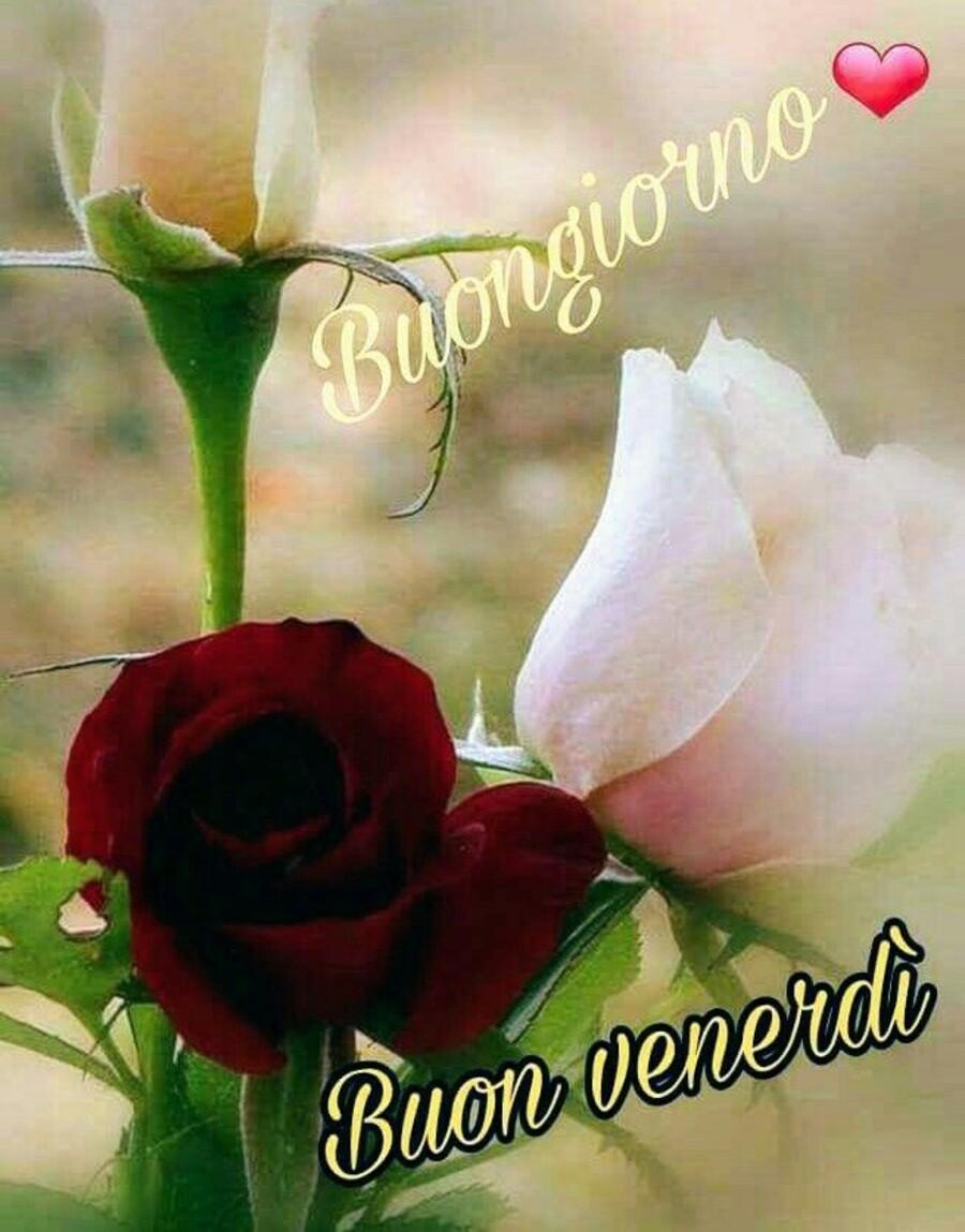 Buon Giorno e Buon Venerdì a tutti (7)