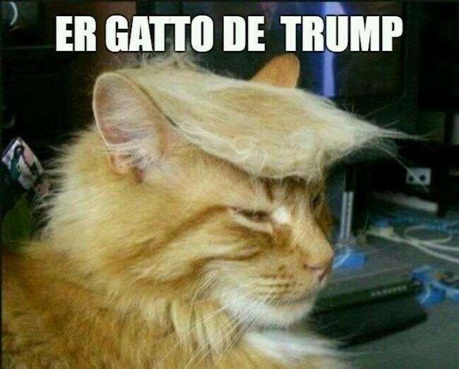 Er gatto de Trump