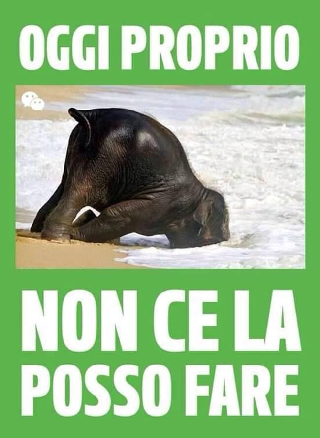 Immagini Divertenti Buongiorno 5 Baciogiorno It